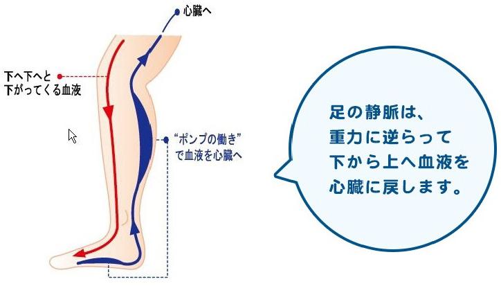 静脈は汚れた血液を心臓に返す血管