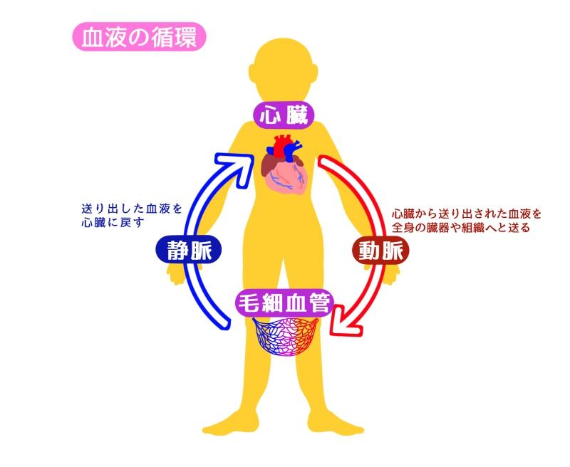 足の血管が浮き出る、透けて見える原因