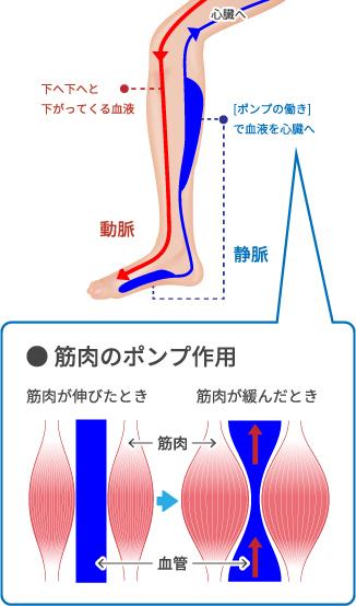 足のむくみの原因は主に3つ