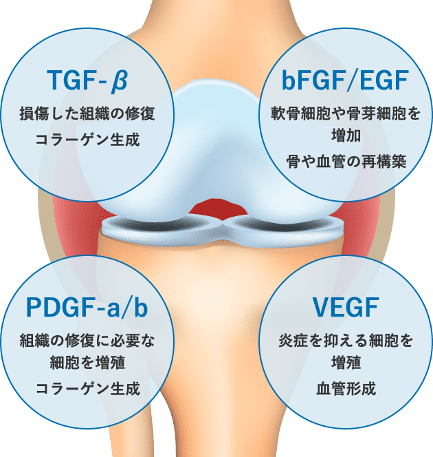 PRPに含まれる成長因子